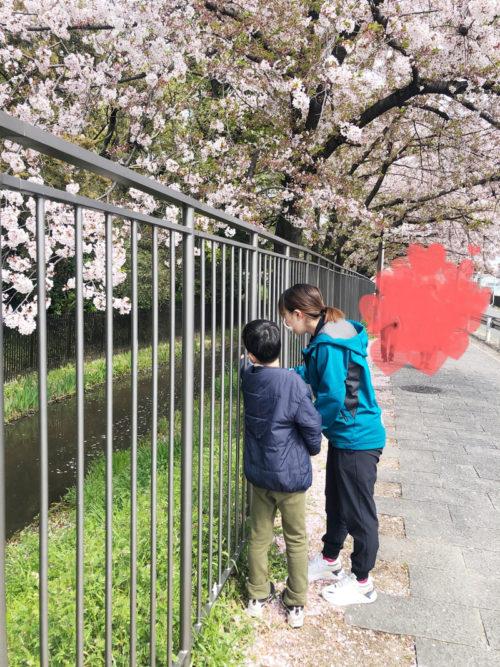 桜の木の下でお散歩