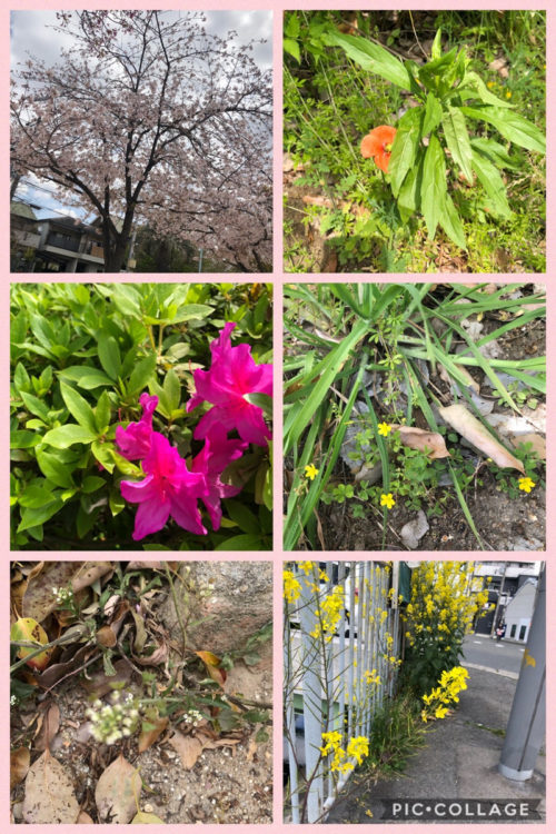 色々なお花